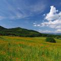 写真: 高原のコスモス畑