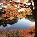 秋深まる天沼公園