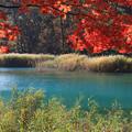 るり沼の秋