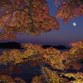 十三夜の紅葉