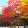 杜の都は紅葉盛り