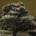 Photos: 日本列島大雪