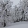 写真: 大雪の証