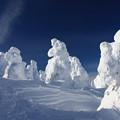 樹氷の世界
