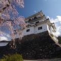 Photos: 桜 城