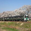 Photos: 桜並木を走る