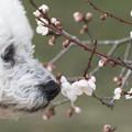 写真: 梅の香り