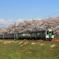 写真: 桜並木の東北本線
