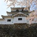 写真: 桜 城