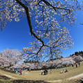 Photos: 桜咲く公園