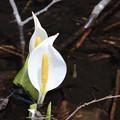写真: ひっそりと咲く