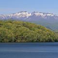 若葉萌える湖