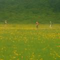 写真: 高原の湿原