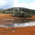 写真: 八甲田山の湿原