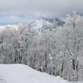 写真: 真冬の蔵王