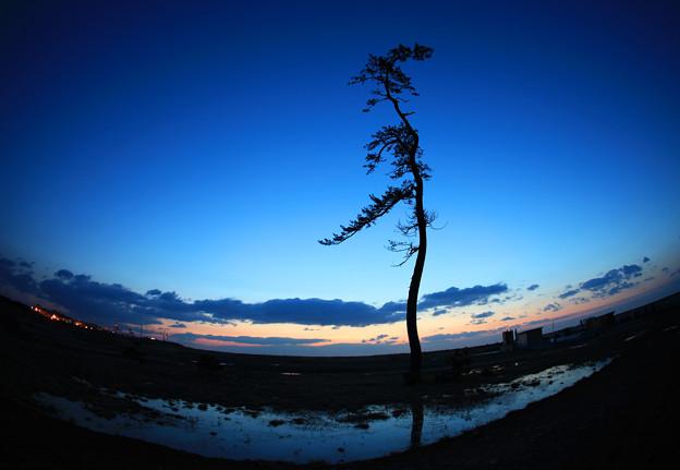 Photos: 津波に耐えた一本松