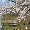 写真: 磐越西線桜のころ