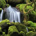 苔の美しい元滝