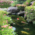 写真: 初夏の庭池