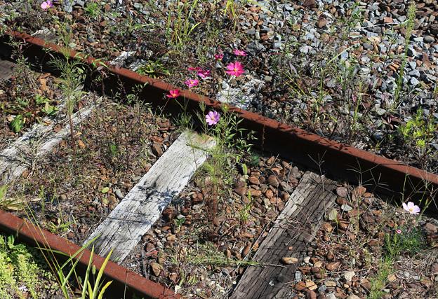 線路に秋花咲く