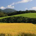 稲穂と牧草の美しさ