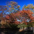 Photos: 彩りの公園