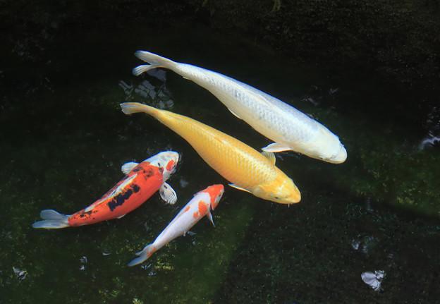 Photos: 水中の彩り