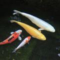 写真: 水中の彩り