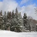 写真: 季節を写す・雪の森