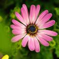 写真: 華麗に咲いて