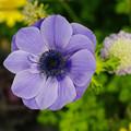 写真: 花に誘われて