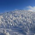 写真: 地蔵岳の樹氷群
