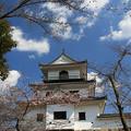 みちのくに桜の季節