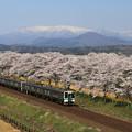 Photos: みちのく桜絶景の旅