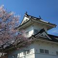 青葉城恋桜