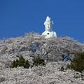 Photos: 桜の山の観音様