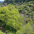 写真: 新緑の季節