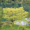 写真: 若葉萌える只見川