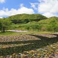 写真: 新緑とお花畑の風光