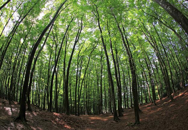 写真: 美しい広大な林