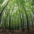 美しい広大な林