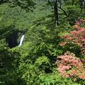 写真: 深山も初夏の候