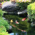 Photos: 初夏を泳ぐ