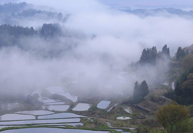 霧にむせぶ棚田