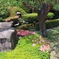 写真: さつき咲く初夏の候