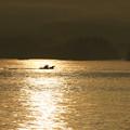 Photos: 輝く松島の海