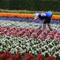 花畑を維持する人