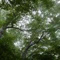 深山の森林
