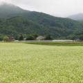 山里の蕎麦畑