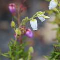 Photos: 高原の花めぐり
